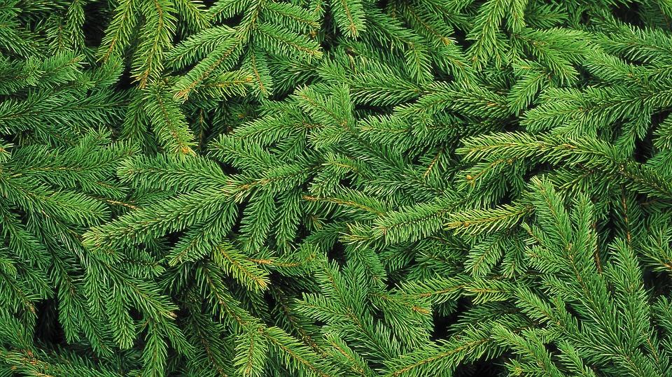 christmas-tree-1954838_960_720