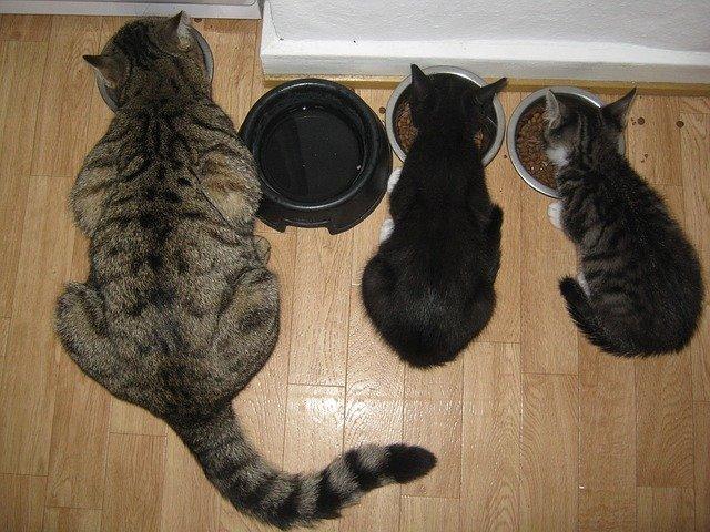 kočky u misek