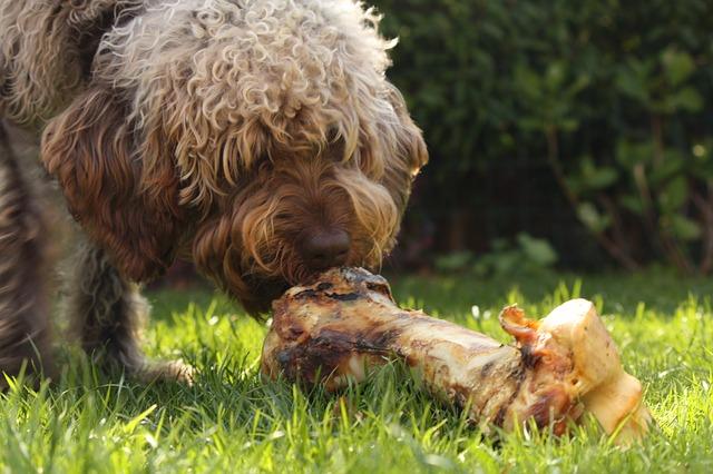 pes s kostí