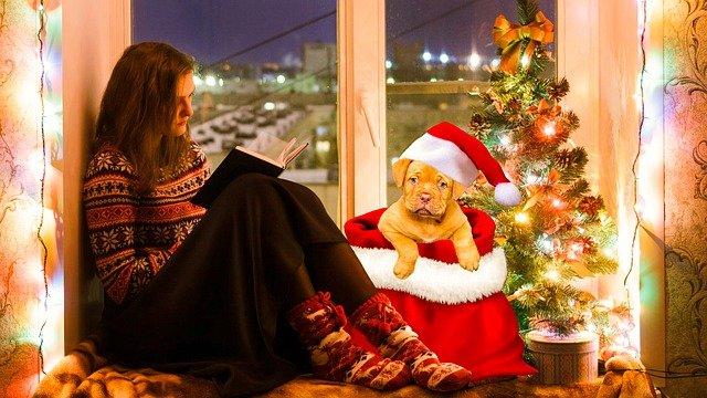 štěně Santa
