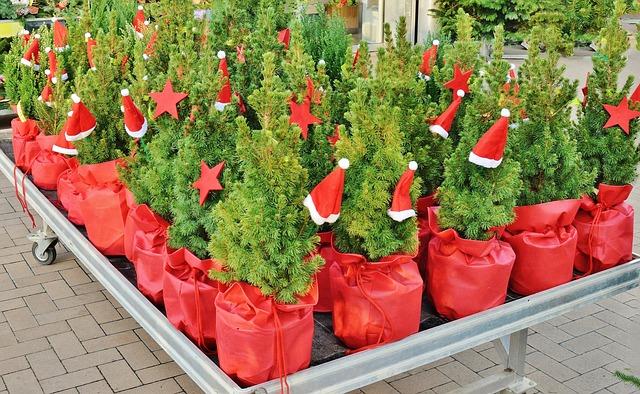 miniaturní vánoční stromky