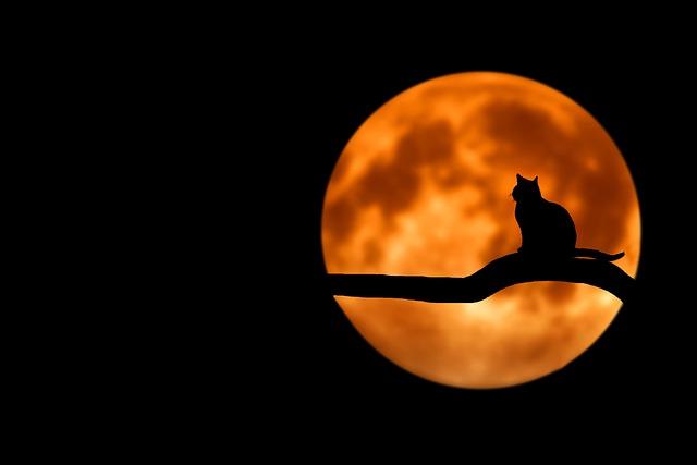 kočka na větvi