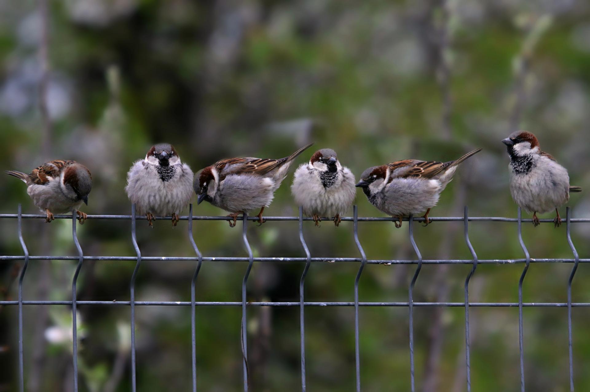 železný plot